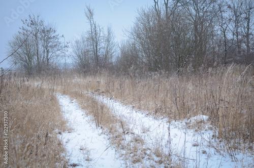 Papiers peints Foret brouillard frozen grass and ground frost in winter background