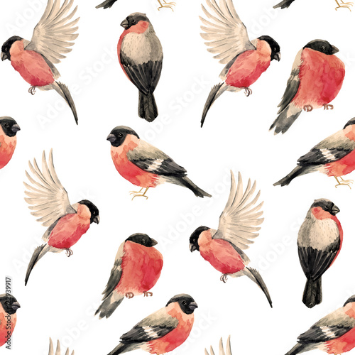 Valokuva Watercolor bullfinch bird pattern