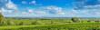 Kulturlandschaft Felder und Weinberge Panorama Blick Rhein Ebene