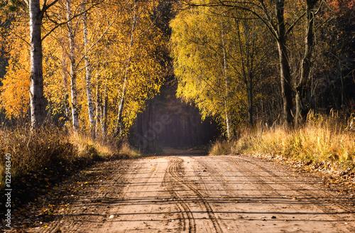 Leśna droga - 122946340