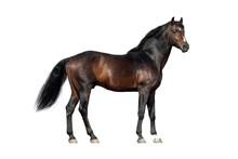 Bay Horse Exterior Isolated On White Background
