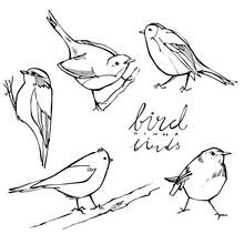 Graphic Birds On White Background