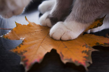 Cute Kitten Playing With Autumn Leaves