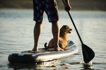 Mix Breed Dog And Man On Stand Up Paddleboard On The Lake Water