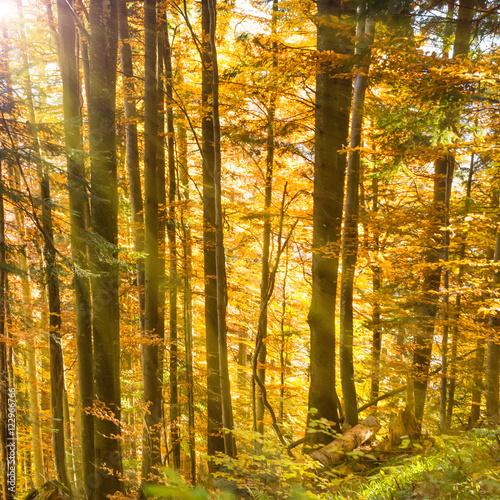 Foto op Plexiglas Landschappen Morning in the autumn forest