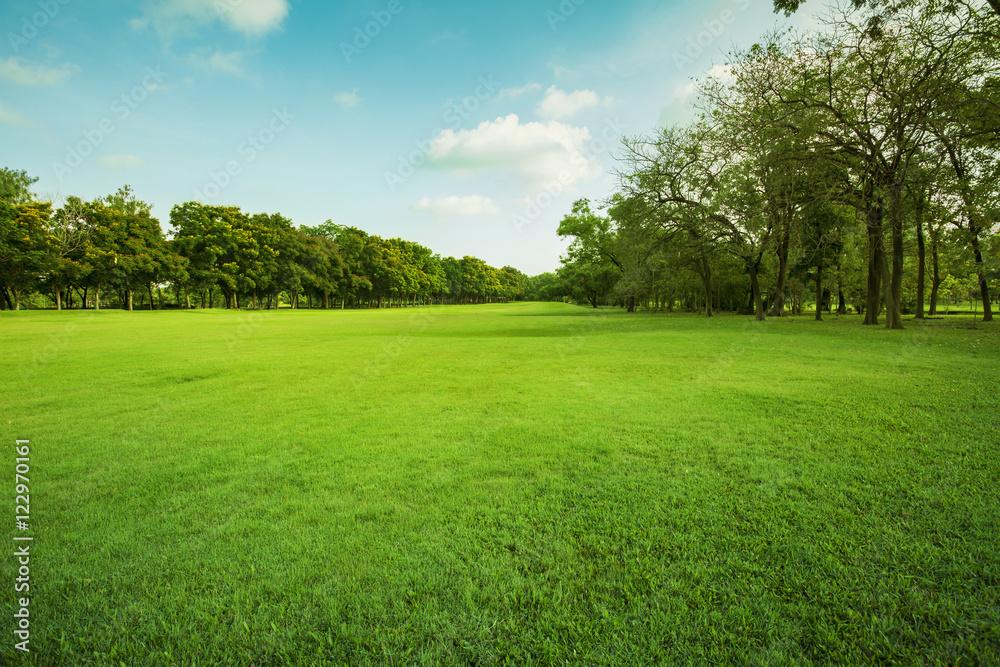Fototapeta green grass field in public park