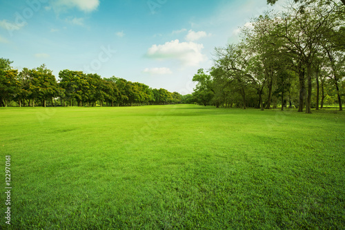 green grass field in public park - 122970161