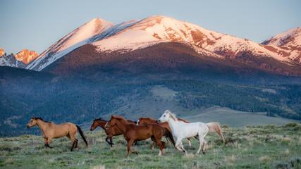 Obraz Colorado Horses
