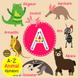 A letter tracing. Ant. Aardvark. Alligator. Alpaca. Anteater. Cute children zoo alphabet flash card. Funny cartoon animal. Kids abc education. Learning English vocabulary. Vector illustration.
