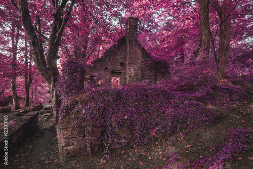Staande foto Crimson Spooky old ruined derelict building in thick surreal forest land