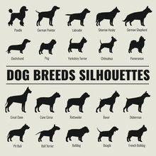 Dog Breeds Vector Silhouettes ...