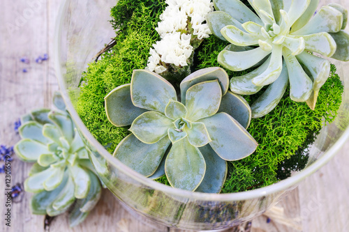 Fotografering  Succulents (echeveria) and moss in glass jar.