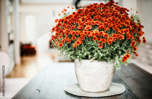 Fotografía Vase with chrysanthemum on a table in the living room, home interior and design