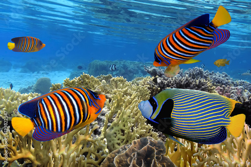 Fototapety, obrazy: Colorful reef underwater landscape with fishes and corals