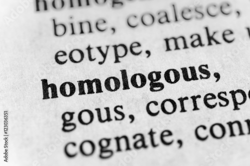 Fotografia, Obraz  Homologous