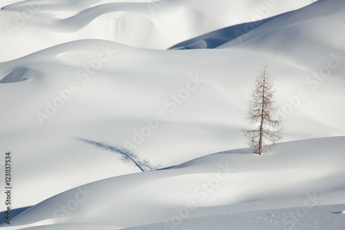Foto op Aluminium Heuvel Snow, winter mountain landscape, tree alone