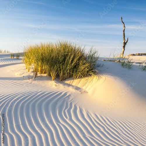 Fototapeta Wydmy   beautiful-view-of-the-coastal-dunes