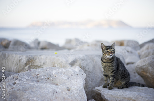 Canvas Print Tabby cat on the shore
