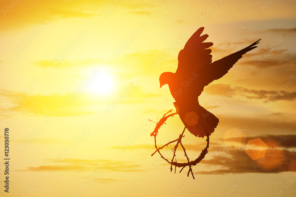 silhouette of pigeon dove holding branch