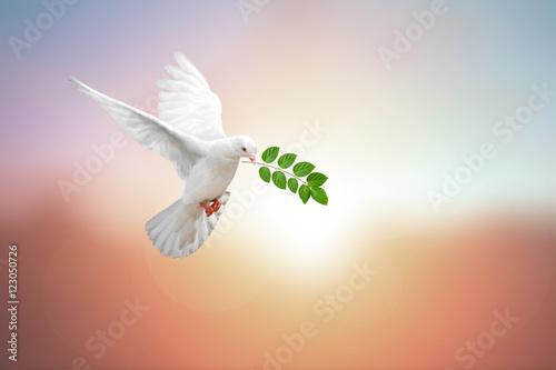 Foto En Lienzo - arrying leaf branch on pastel background