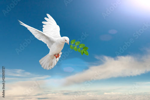 White Dove carrying leaf branch