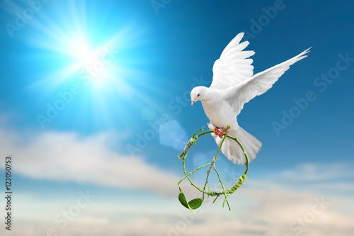 white dove holding green branch in peace sign shape flying on blue sky
