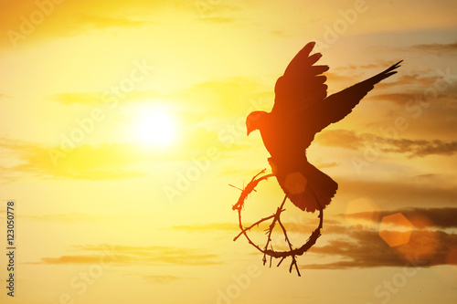 Canvas Print - silhouette of pigeon dove holding branch