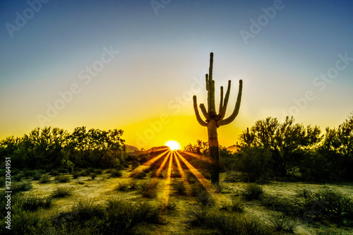 Keuken foto achterwand Cactus Sunrise with Sun Rays shining through the Shrubs in the Arizona Desert with a Saguaro Cactus in the Foreground