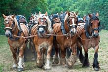 1156 Pferdegespann
