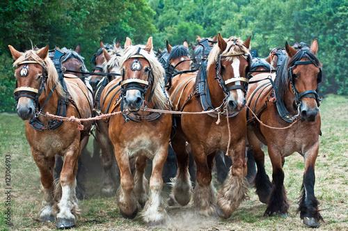 Valokuva 1156 Pferdegespann