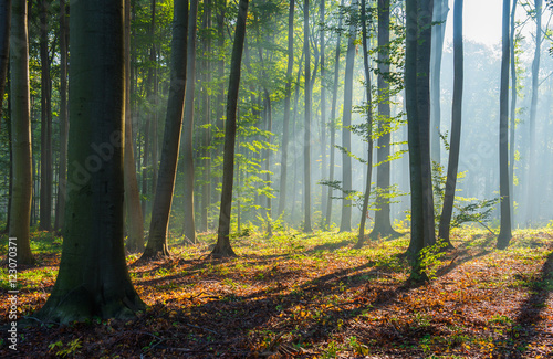 Papiers peints Forets Beautiful morning in the forest