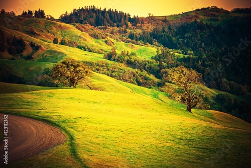 Poster Geel Northern California Countryside