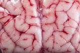 Textura de un cerebro fresco de cordero