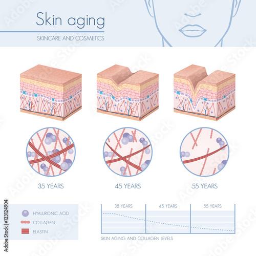 Fotografía  Skin aging
