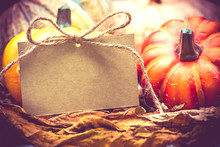 Thanksgiving Background, Harvest In Fall Autumn Season