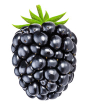 Blackberry Isolated On White Background With Clipping Path