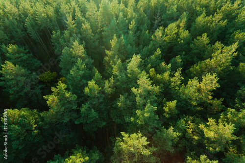 Papiers peints Forets Beautiful panoramic photo over the tops of pine forest. Aerial view. From above. Picture taken using the copter. Top view