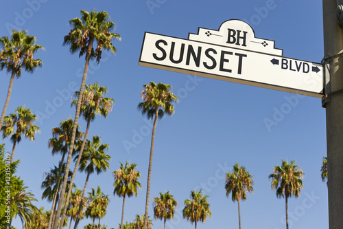 Photo  Sunset Boulevard street sign with palm trees in the background