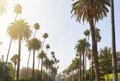 La pose en embrasure Palmier Palm Trees cascading down residential street