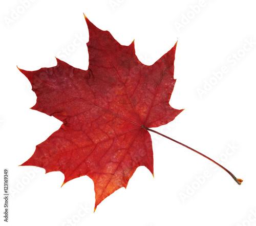 Czerwony liść klonowy na białym tle