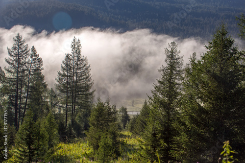 Fototapety, obrazy: Fog covering the mountain forests