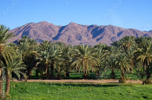 Papiers peints Maroc Green oasis in Morocco