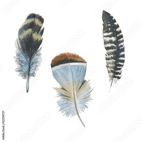 piora-dzikich-ptakow-kolorowe-nakrapiane-piorka