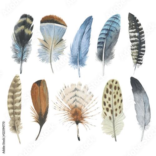 roznorodne-ptasie-piora-na-bialym-tle-zestaw-kolorowych-pior