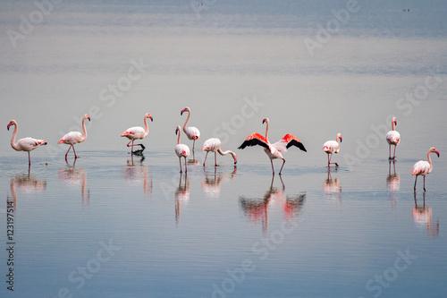 Garden Poster Flamingo beautiful light on pink flamingo group