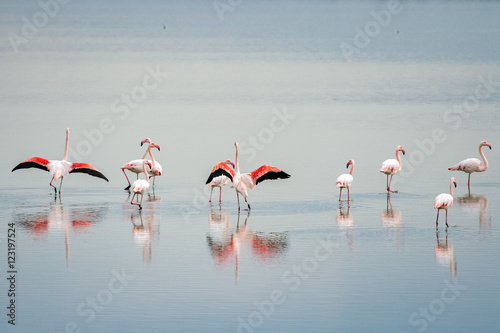 Cadres-photo bureau Flamingo beautiful light on pink flamingo group