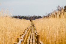 Route To Nowhere/Wooden Plank ...