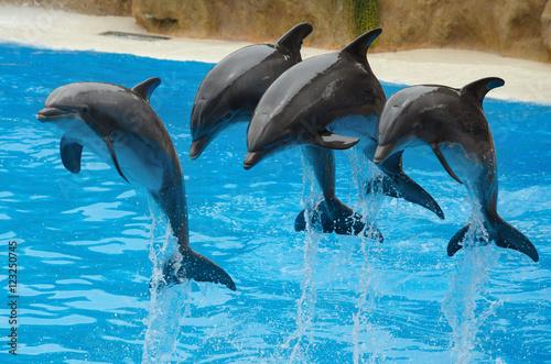 Plakat Delfiny bawiące się w basenie