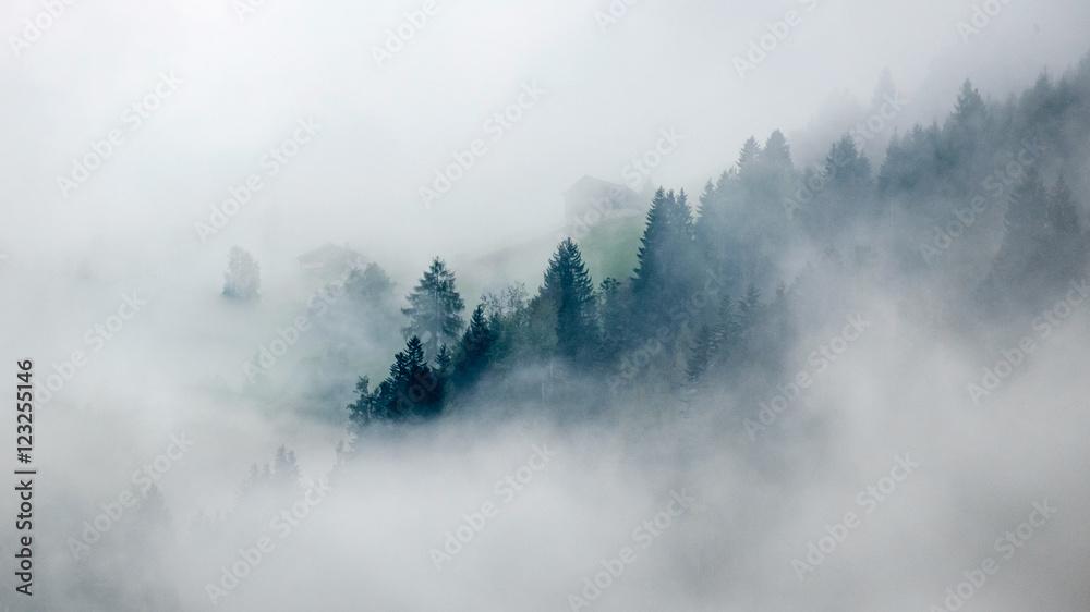 Fototapety, obrazy: Trees in mist