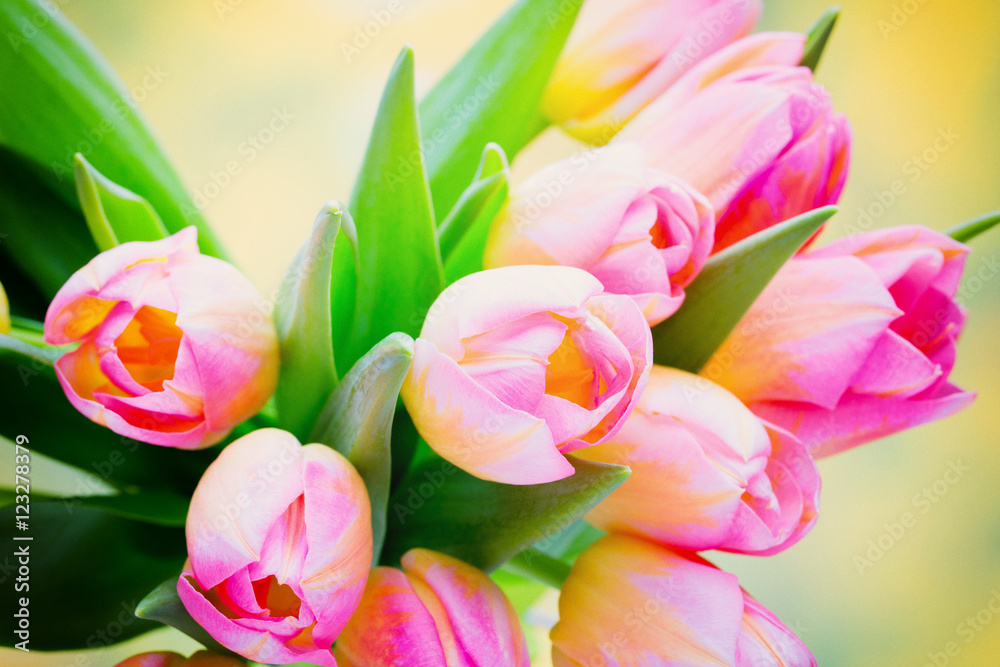 Fototapety, obrazy: Spring flowers. Tulip bouquet on the bokeh background.